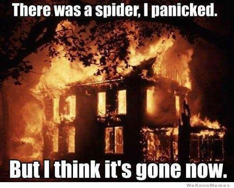 spider panic